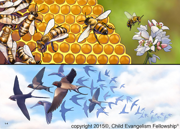 5-part Bible lesson series on Stewardship, lesson 1 – Let's appreciate and care for God's wonderful creation.   Picture 1-4 : Examples of God's wonderful creation – bees and swallows.